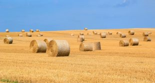 Baling Machines And The Farming Industry